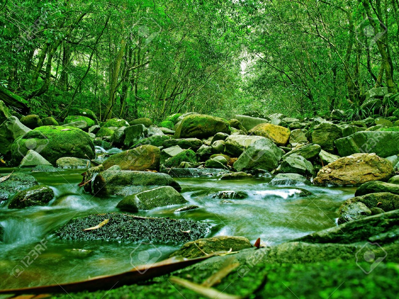 Green Forest and River in Australia Stock Photo - 4988845
