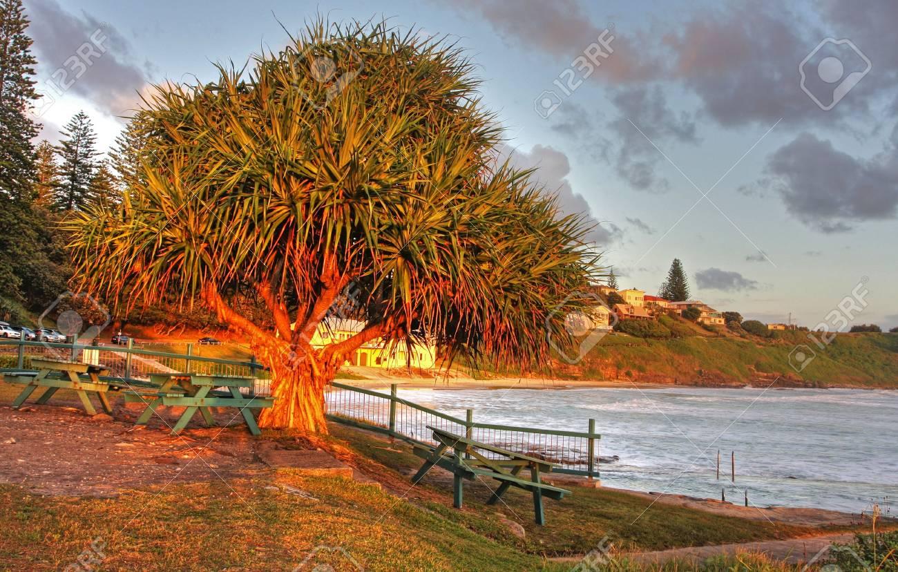 Tree against the raising sun on ocean beach Stock Photo - 4988861