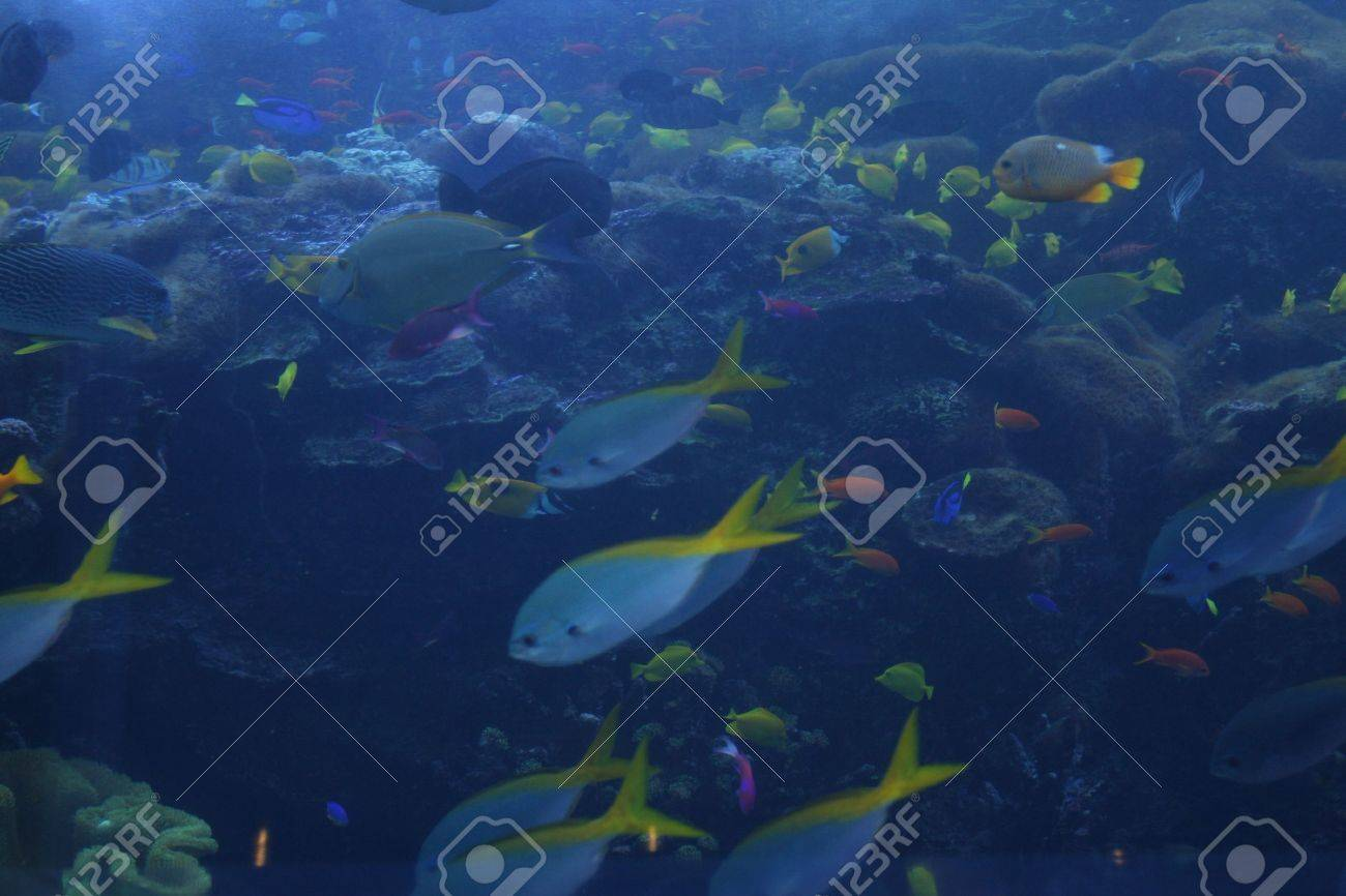sharks and fish in the Atlanta aquarium Stock Photo - 5600333