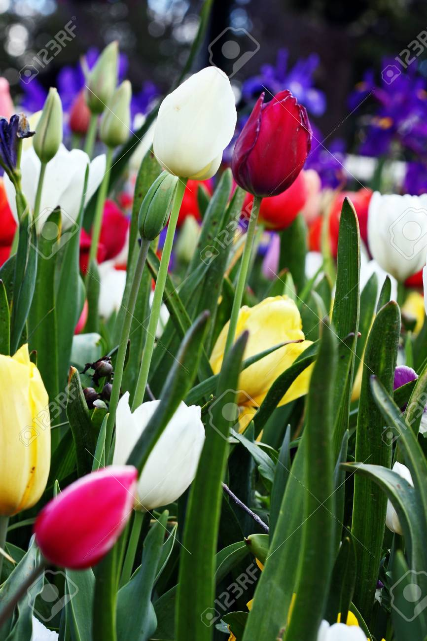 Colorful garden in springtime with trees and flowers Stock Photo - 5790865