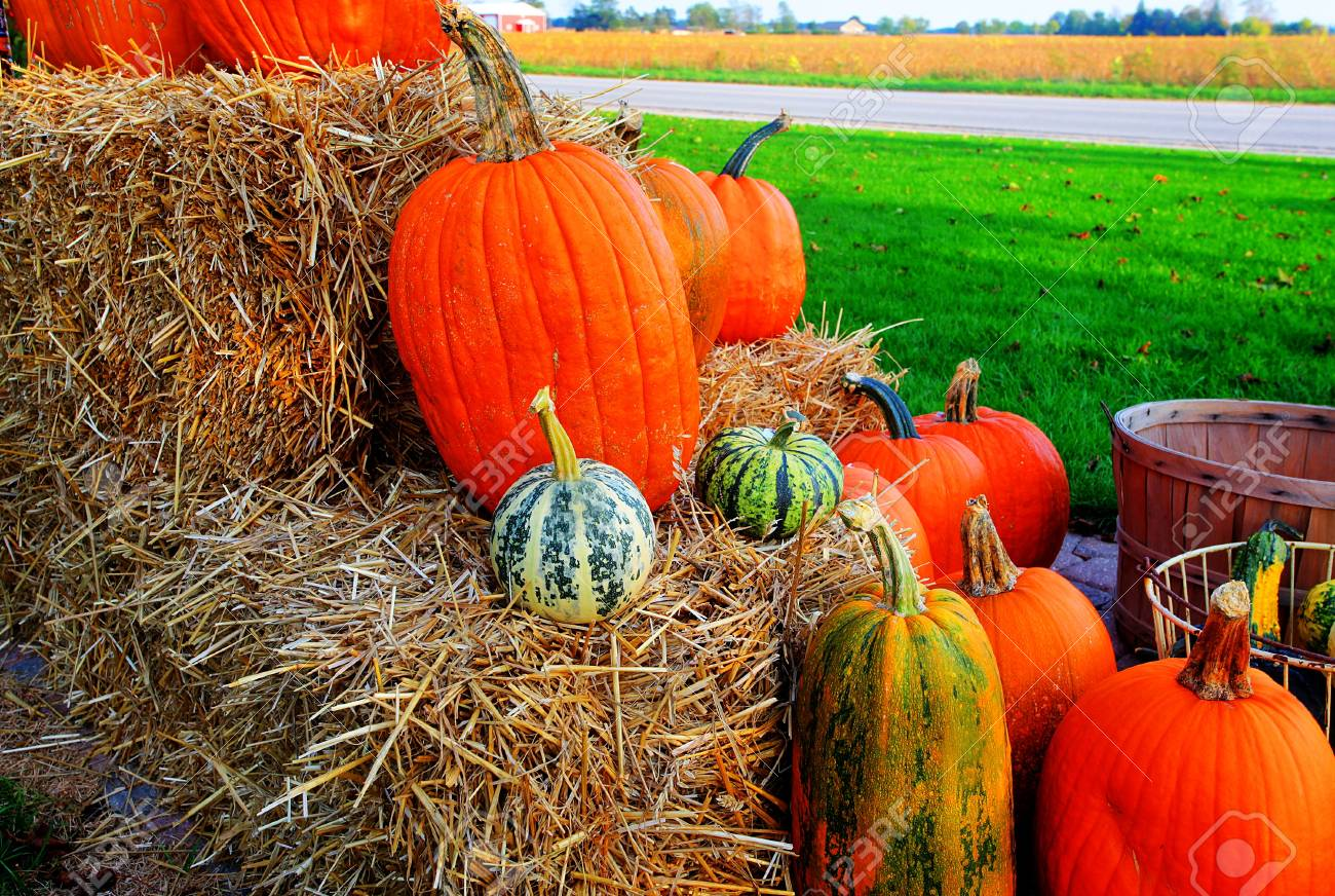 bunch of pumpkins for sale before Halloween Stock Photo - 9852804