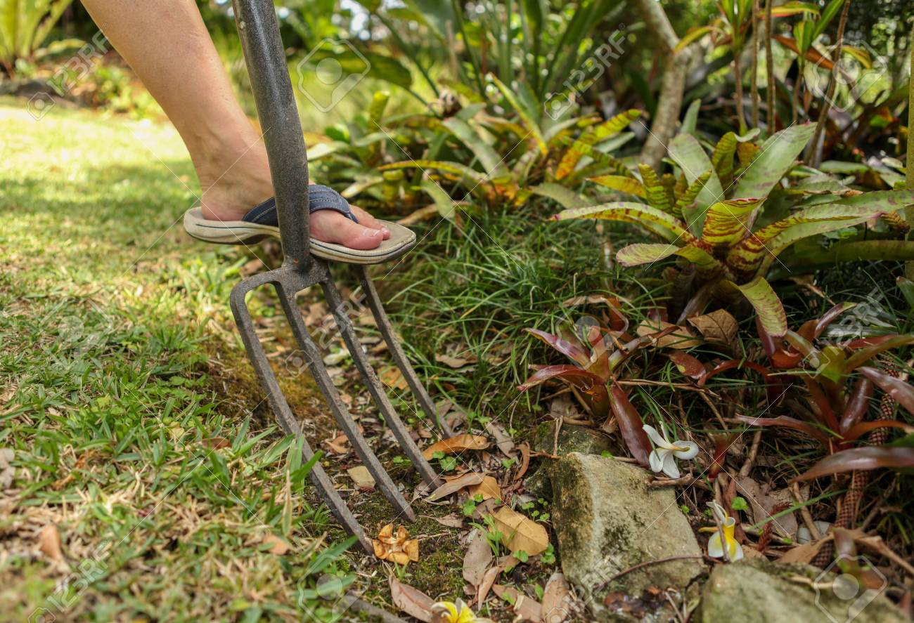 Gardening With A Garden Fork And Maintenance Stock Photo, Picture ...