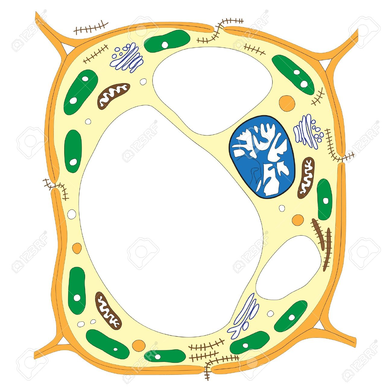 Labelled Diagram Of A Plant Cell Diagram Collections Wiring Diagram - animal cell coloring page answers