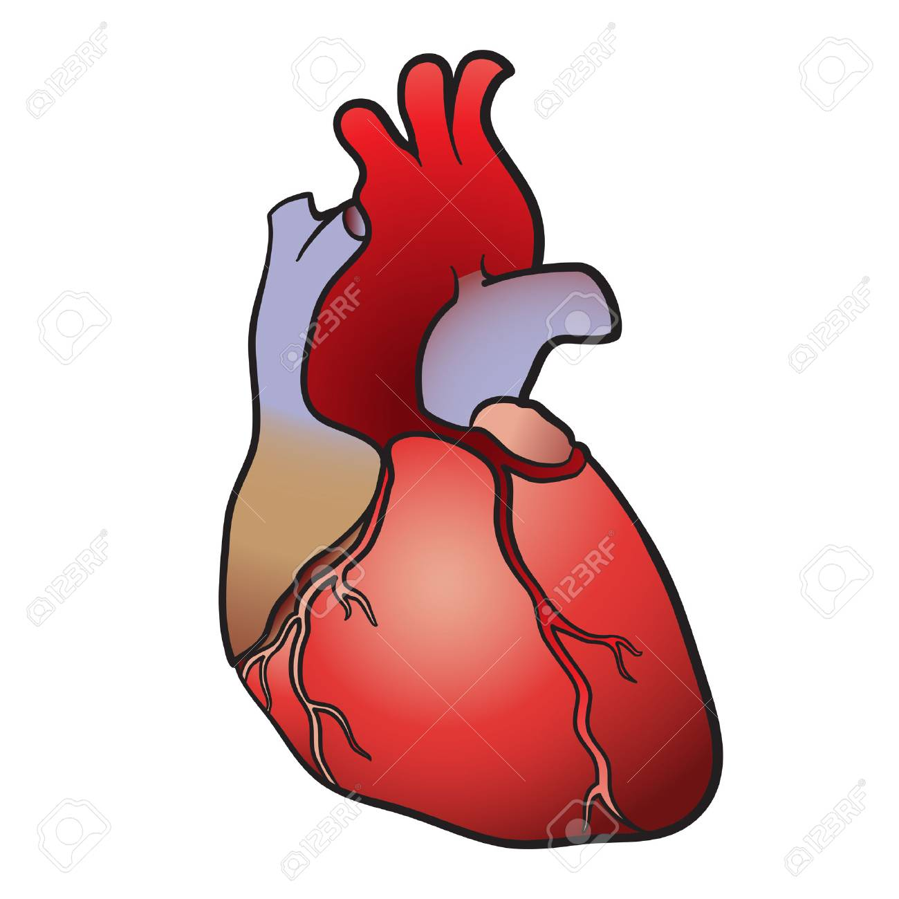 Illustration of the human heart Stock Vector - 23292127
