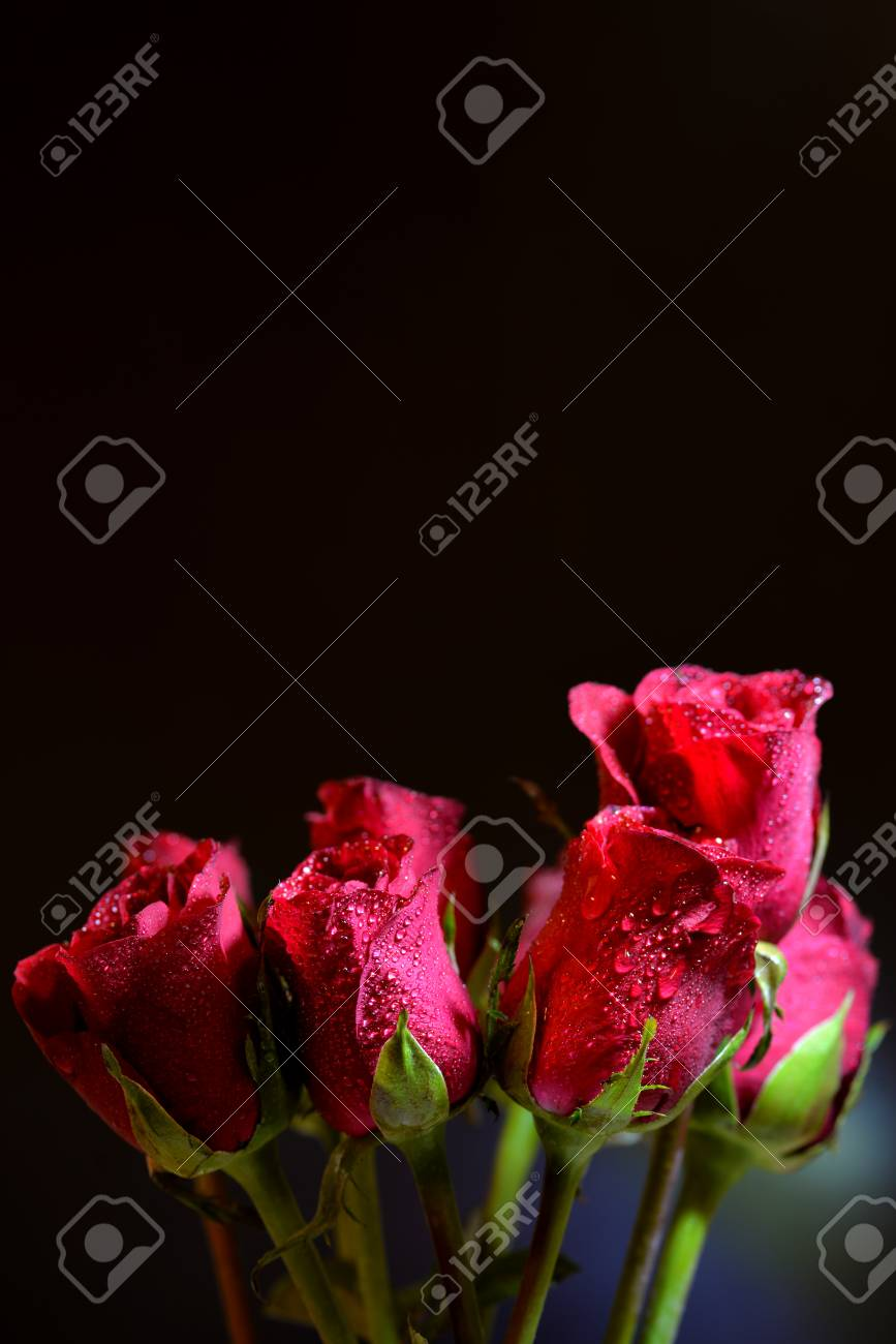 lovely roses bouquet on dark background stock photo, picture and