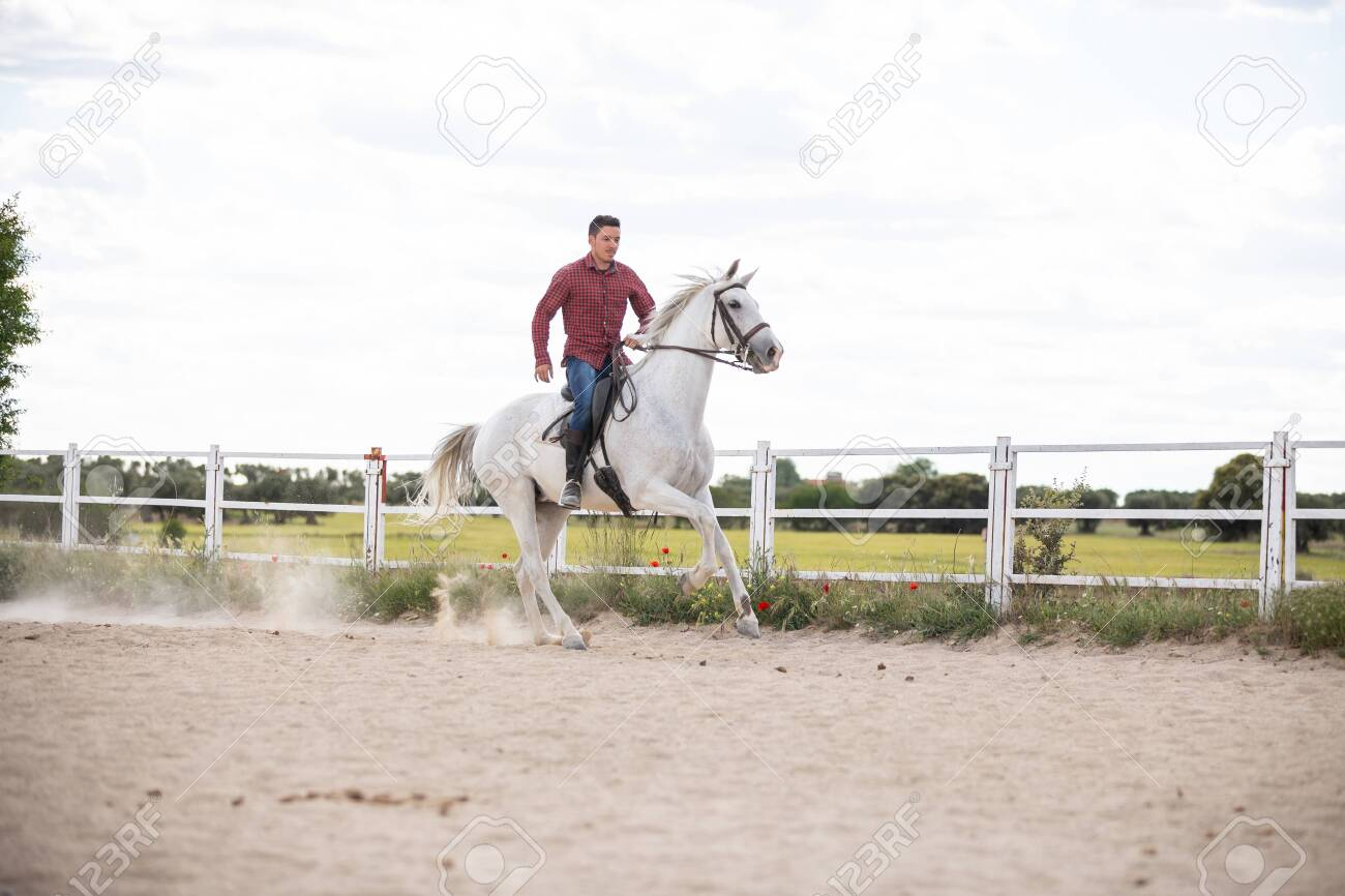 Young Guy In Casual Outfit Riding White Horse On Sandy Ground Stock Photo Picture And Royalty Free Image Image 125240629