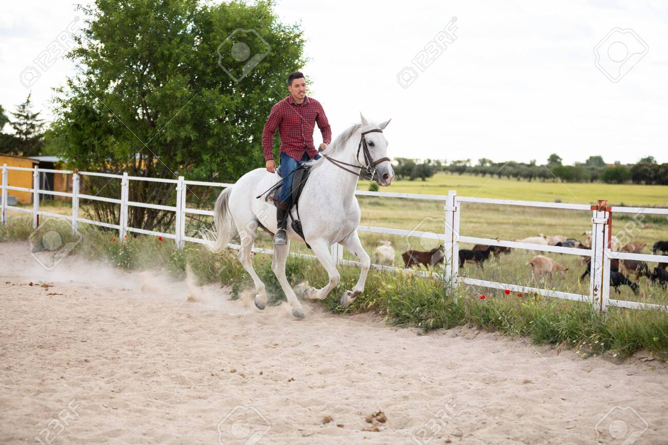 Young Guy In Casual Outfit Riding White Horse On Sandy Ground Stock Photo Picture And Royalty Free Image Image 125240631