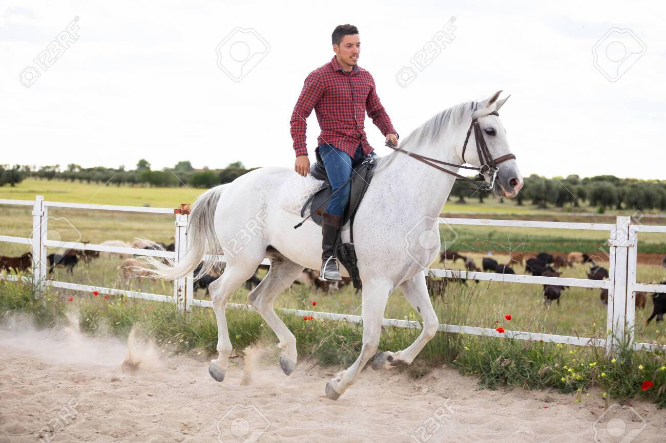 Young Guy In Casual Outfit Riding White Horse On Sandy Ground Stock Photo Picture And Royalty Free Image Image 125240632