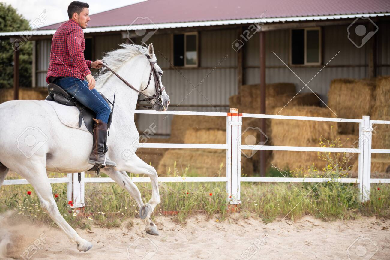 Young Guy In Casual Outfit Riding White Horse On Sandy Ground Stock Photo Picture And Royalty Free Image Image 125240634