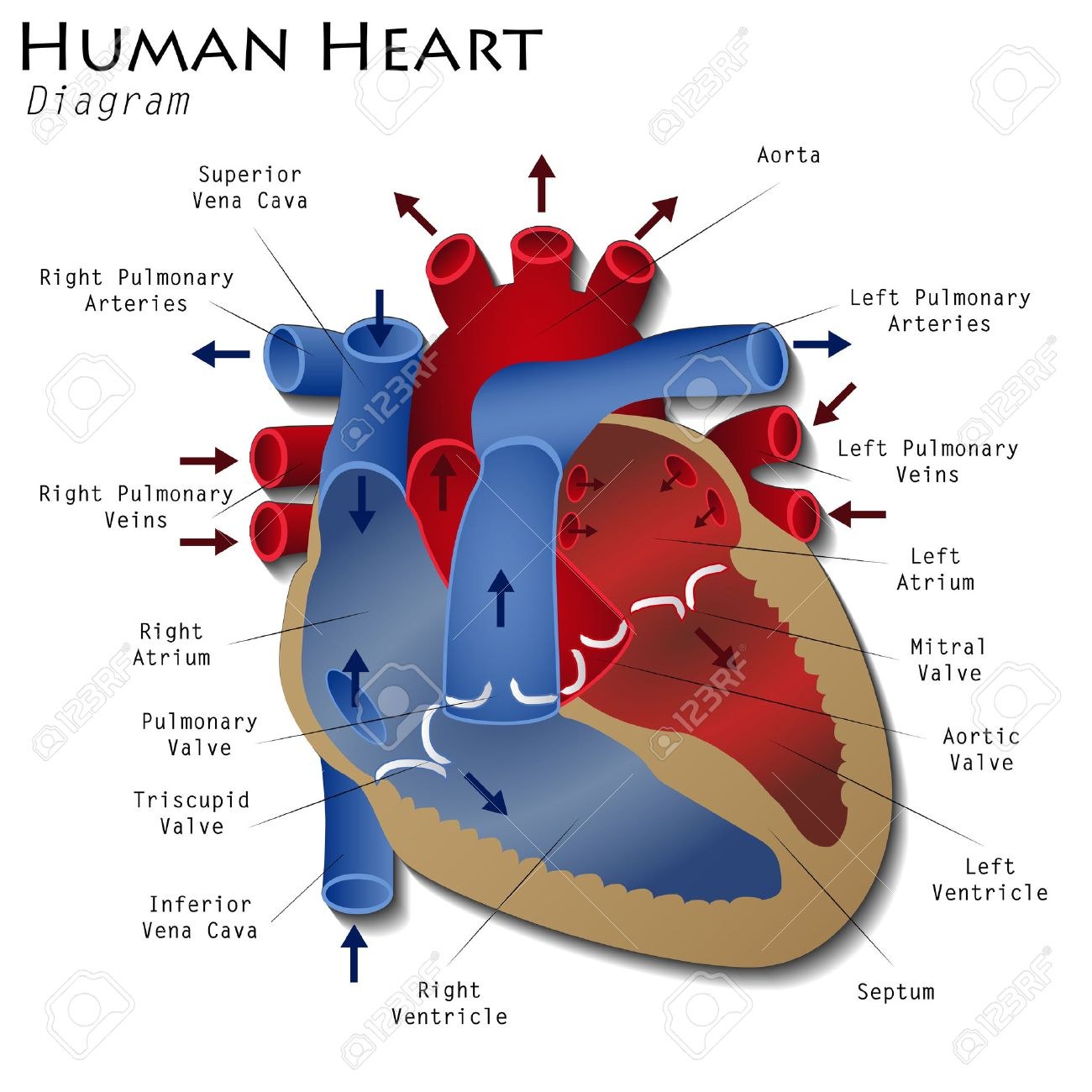 Image result for royalty free images of heart