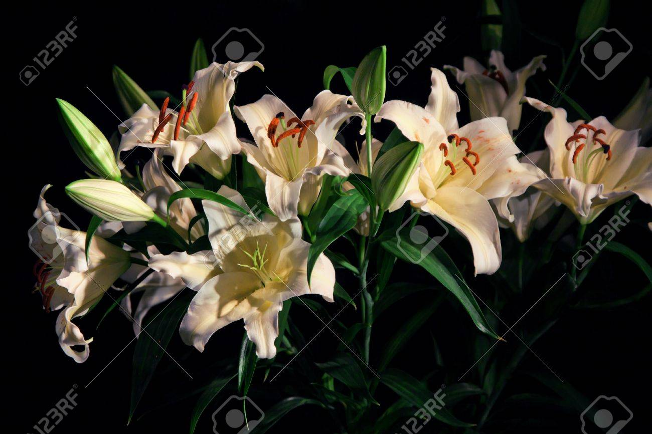Bouquet of lily flower on black background stock photo picture and bouquet of lily flower on black background stock photo 12724245 izmirmasajfo