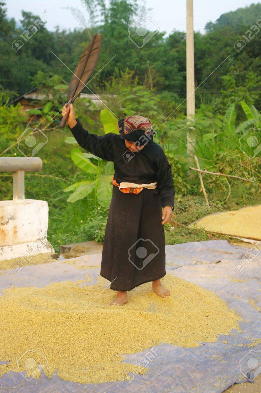 This grandmother valve Thai corn to remove impurities  She performed as her ancestors with a manual van Stock Photo - 18648968