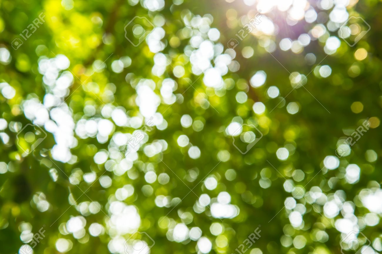 Background image zoom out - Zoom Shot Out Of Focus Green Tree For Background Stock Photo 24837421