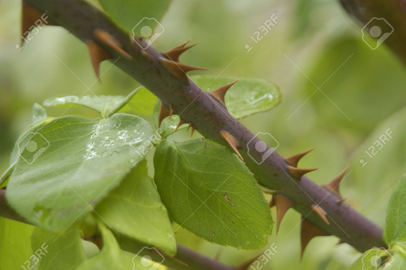 Drops of rainwater and dew on plants Stock Photo - 6059118