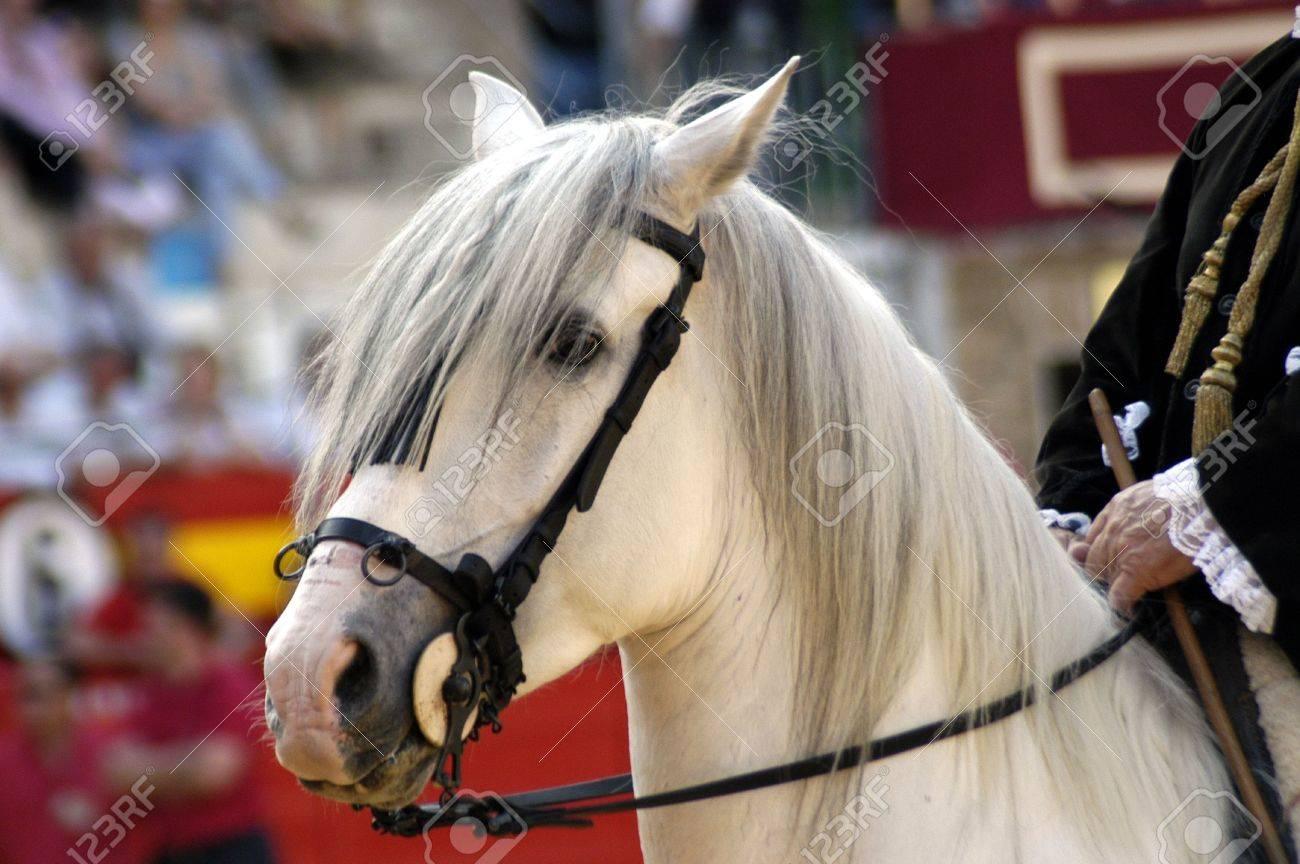 Horses in a bullfight Stock Photo - 6690771