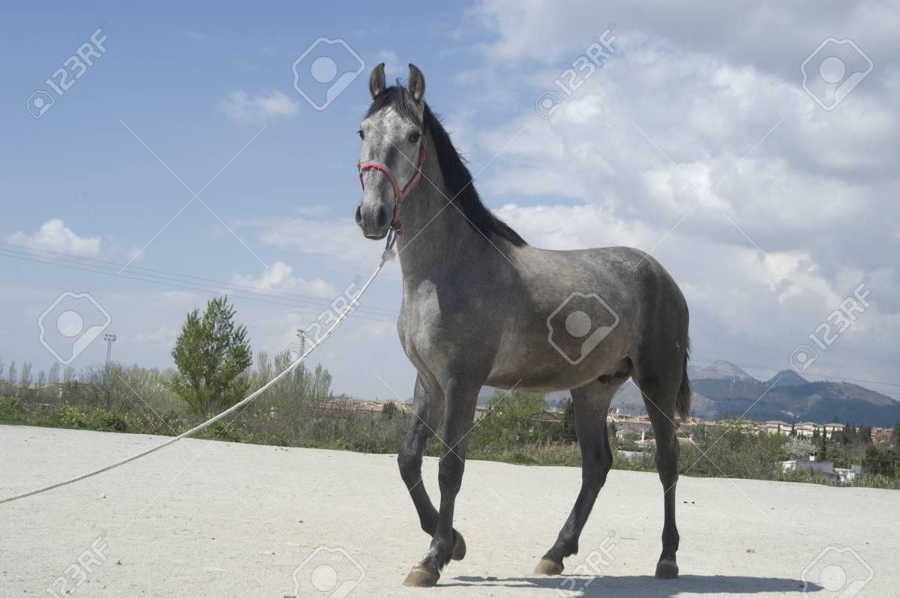 Horse Stock Photo - 7787905