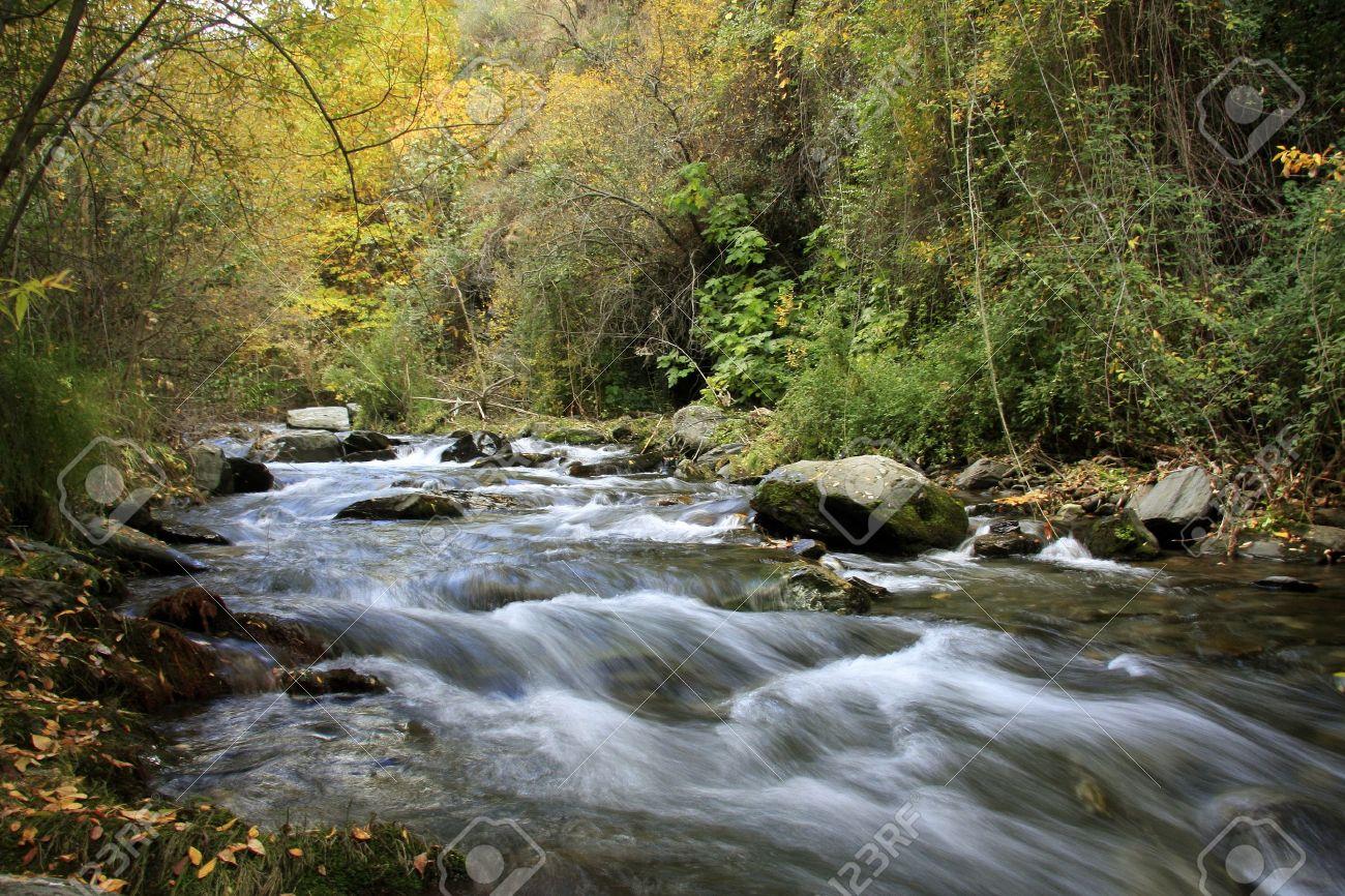 Bosque de Sierra Nevada, el río Genil Foto de archivo - 8988057