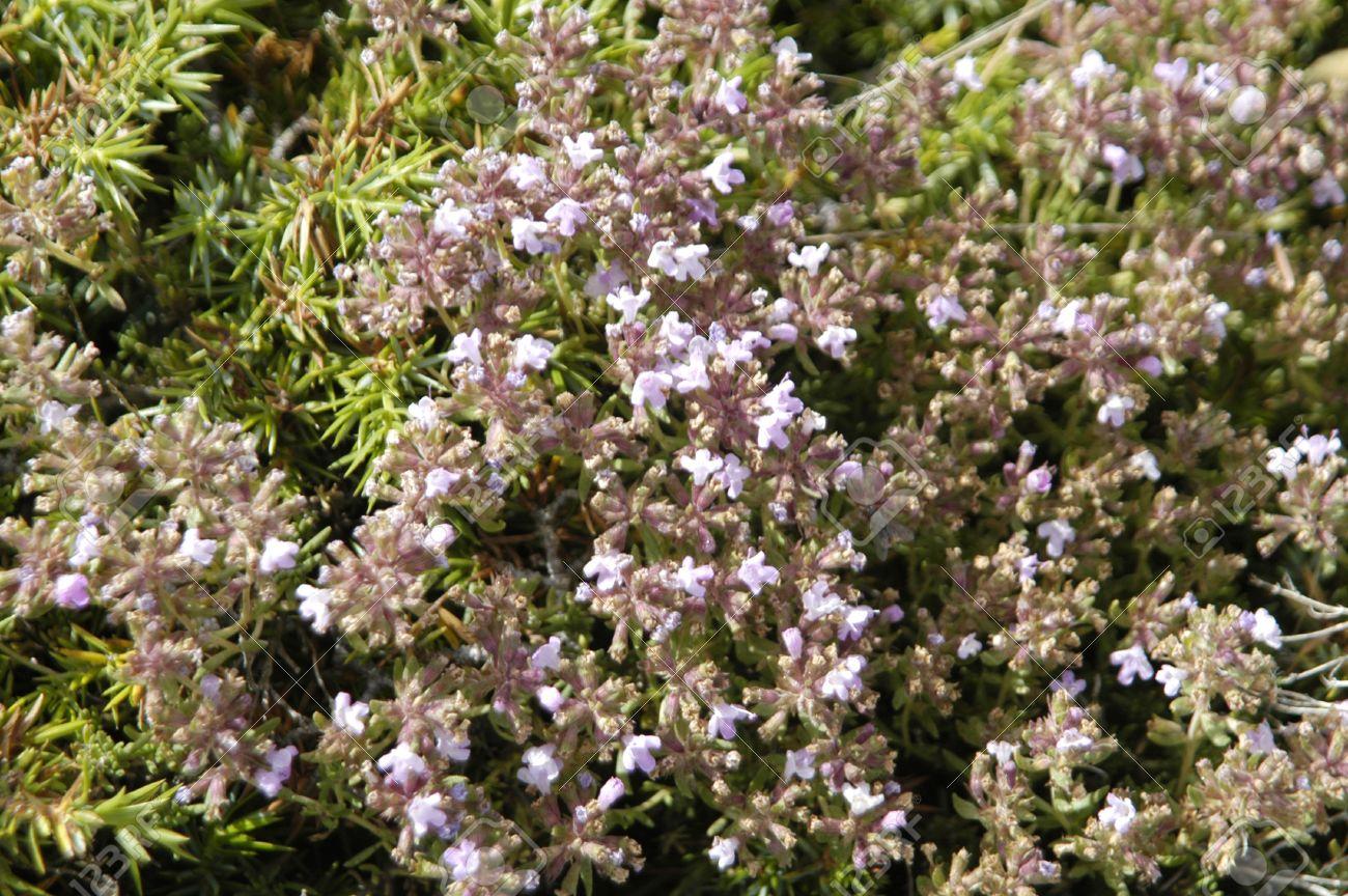 Algunas de las muchas plantas nativas de las Sierras del