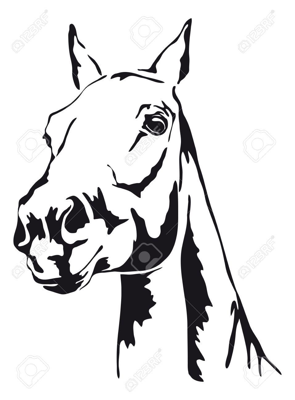 Schwarz Weiß Konturen Des Pferdes Lizenzfrei Nutzbare Vektorgrafiken