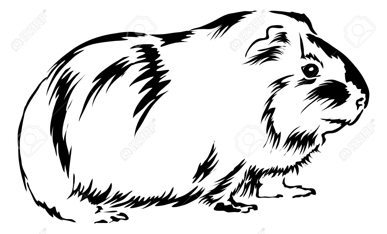 Free coloring pages guinea pigs - Guinea Pig Guinea Pig Sitting On Bottom And Looking Curious
