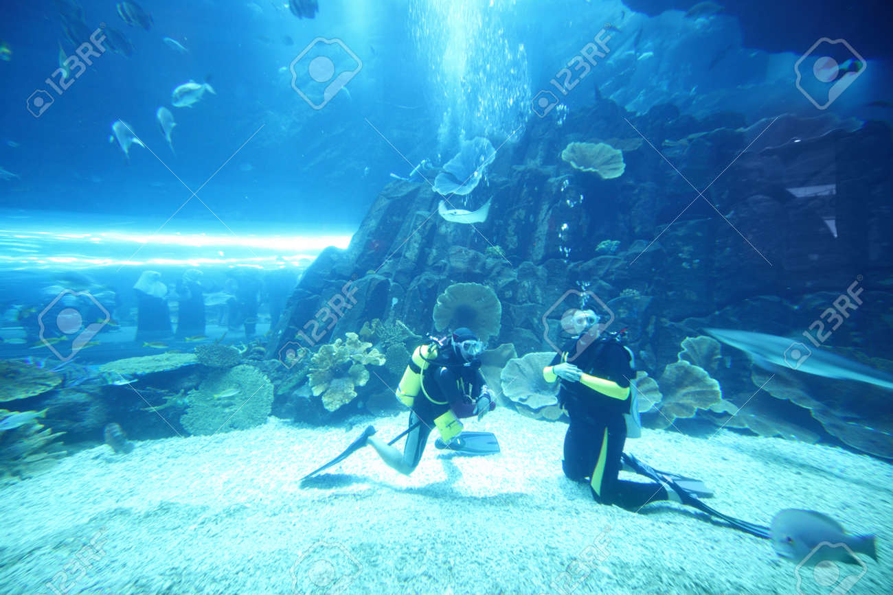 two scuba divers in wet suits diving in big aquarium with fishes Stock Photo - 12512734