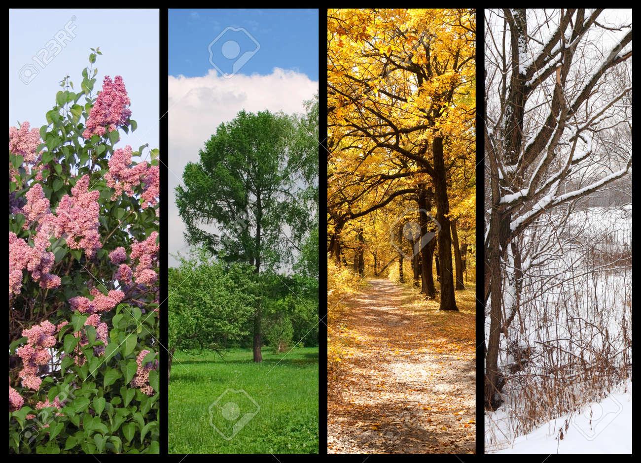 Vier Jahreszeiten Fruhling Sommer Herbst Winter Baume Collage Mit