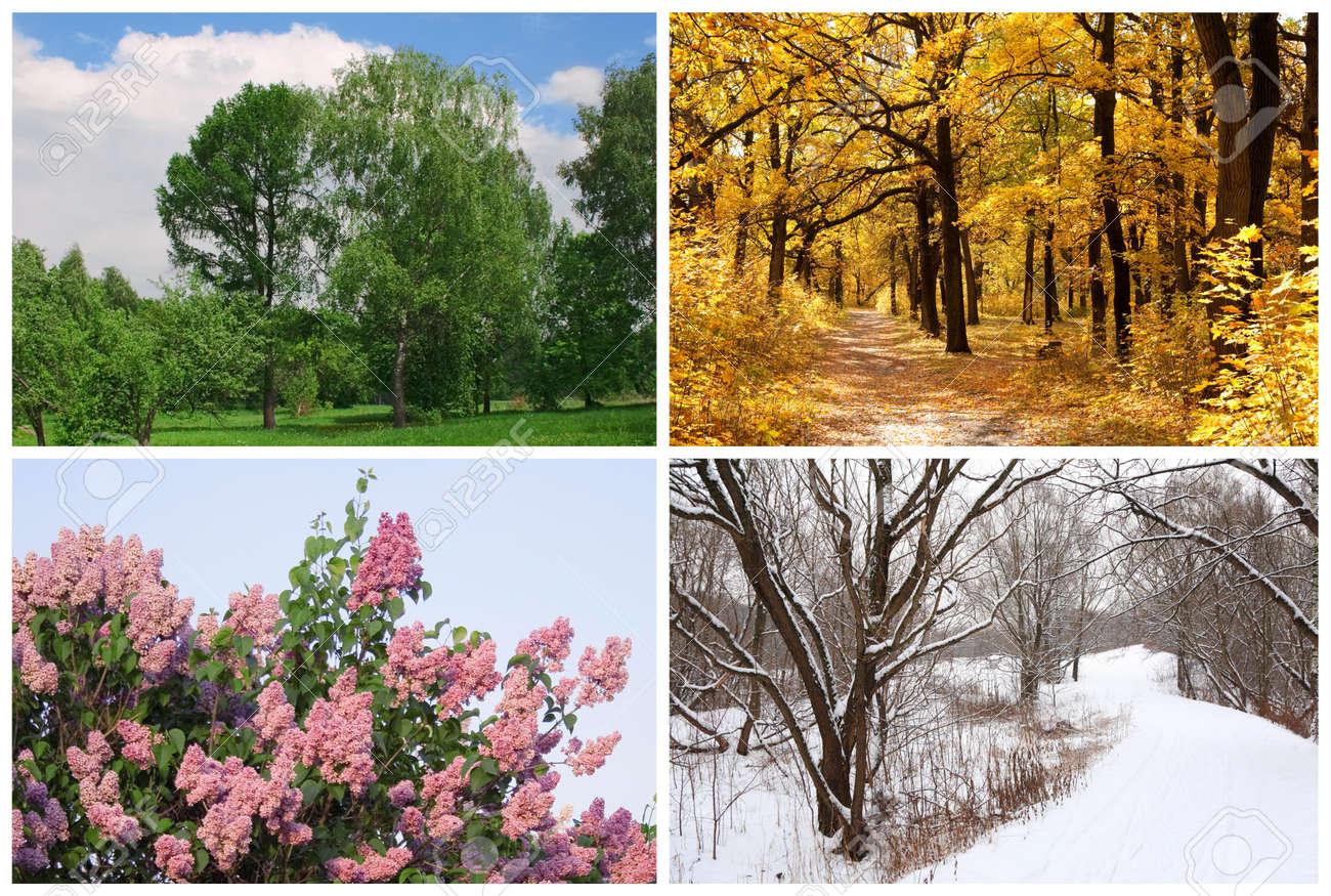 Summer, Autumn, Winter, Spring