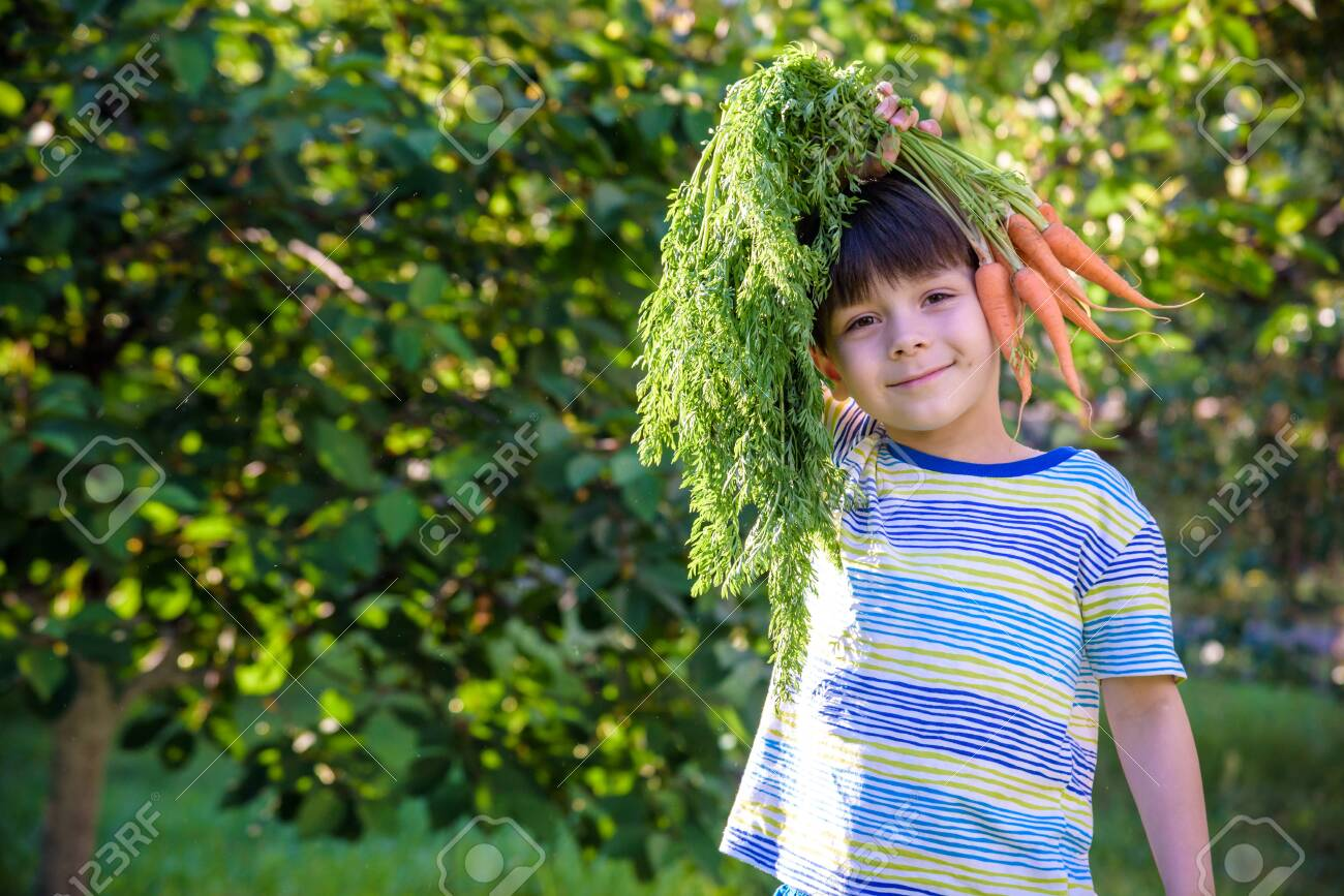 Fun portrait of a cute child holding a homegrown organic carrot over his head outdoors. - 129887559