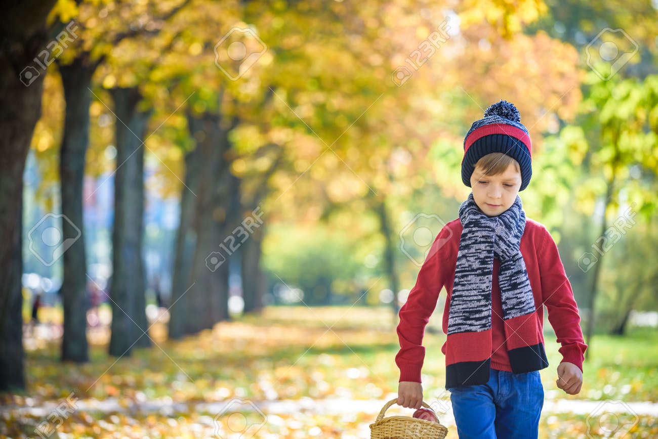 Child picking apples in autumn. Little baby boy playing in apple tree orchard. Kids pick fruit in a basket. Toddler eating fruits at fall harvest. Outdoor fun for children. Healthy nutrition. - 156206549