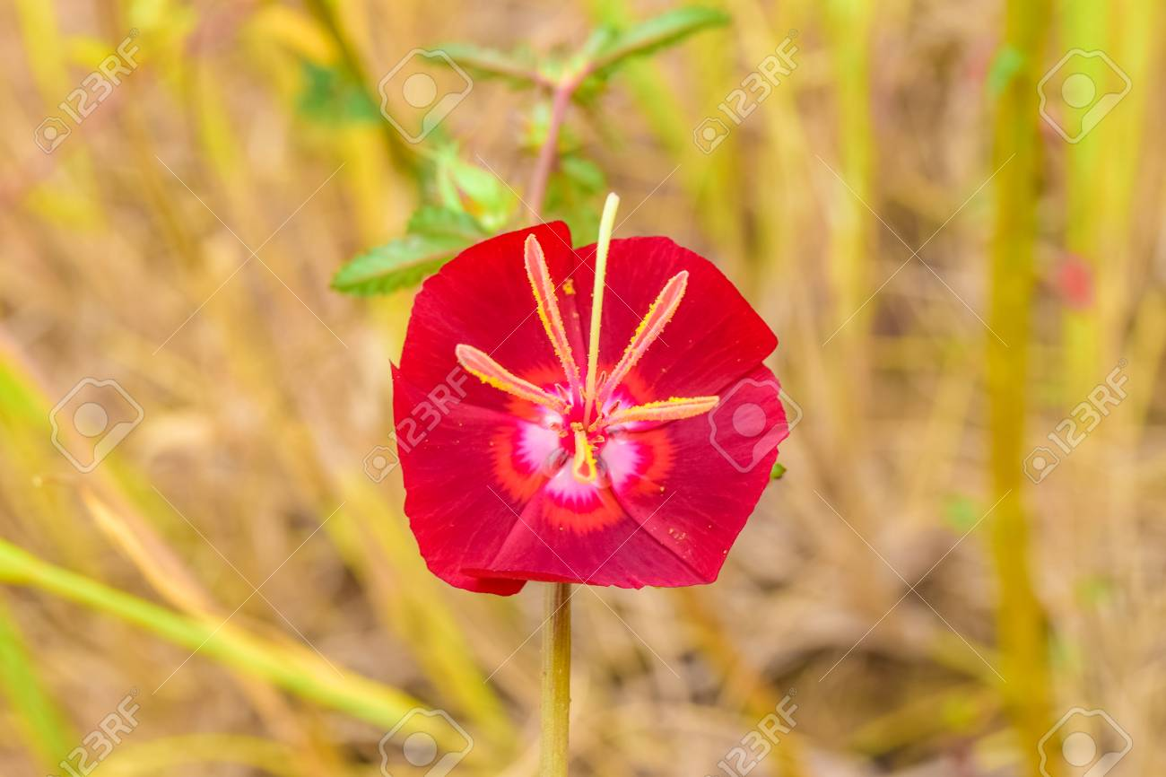 Red Flower And Beautiful Nature Background Rare Flowers Stock Photo Picture And Royalty Free Image Image 68602419