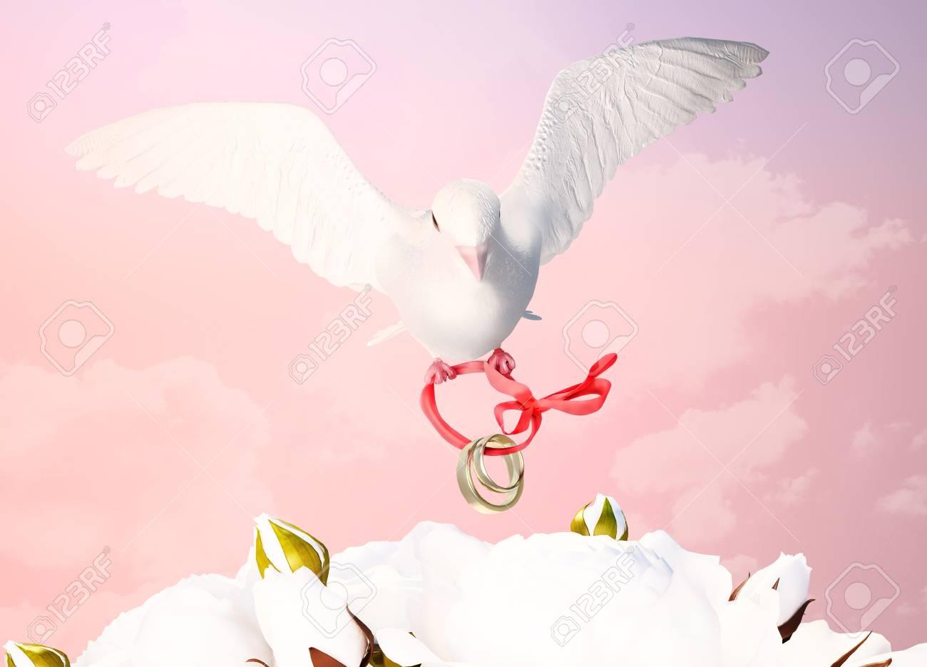 Weisse Taube Hochzeit Konzept Lizenzfreie Fotos Bilder Und Stock