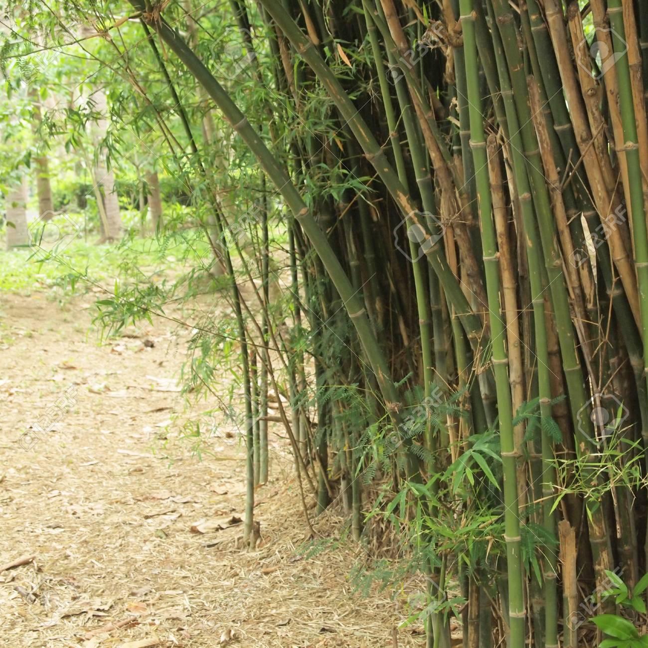 Bambus Wald Baume Hintergrund Innen Tropischen Dschungel