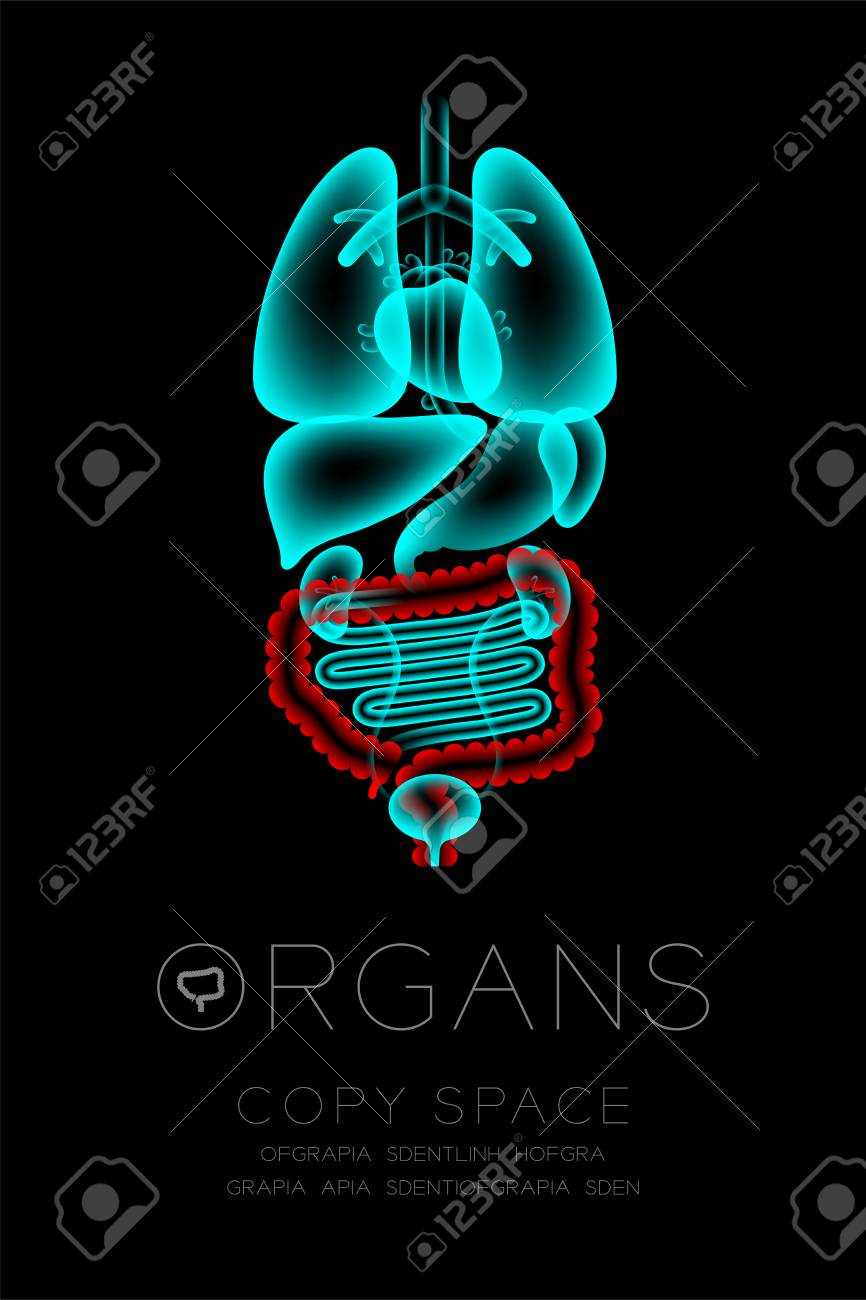 Glowing Male Body Organ X-ray. Large Intestine Infection Concept ...