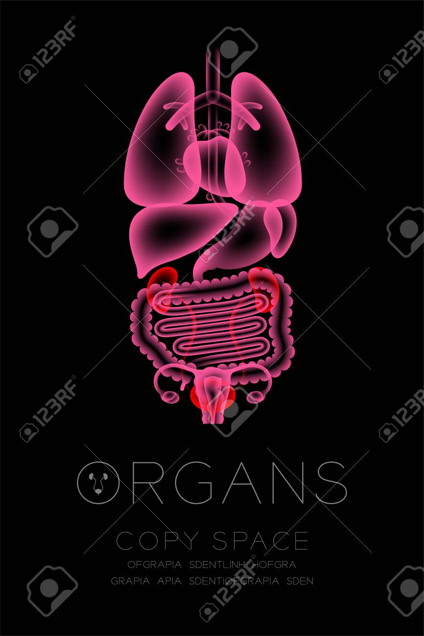 Glowing Female Body Organ X-ray. Kidney And Bladder Infection ...