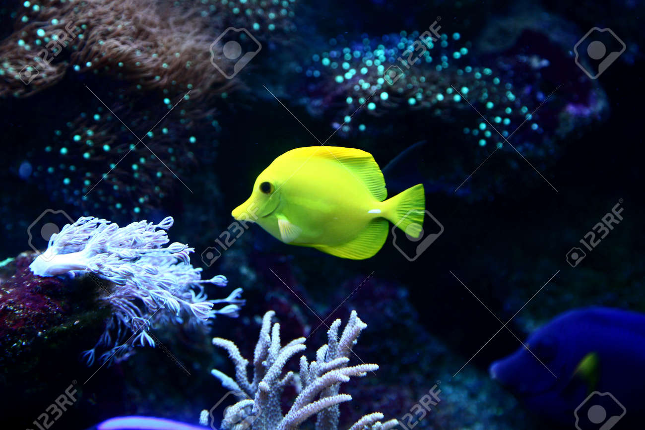 The underwater world  The yellow fish against coral Stock Photo - 14799501