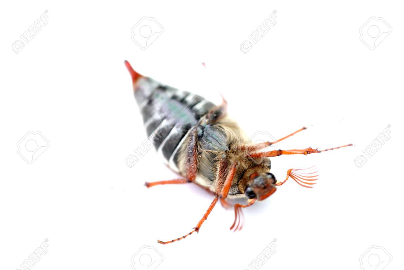 un hanneton sur le dos