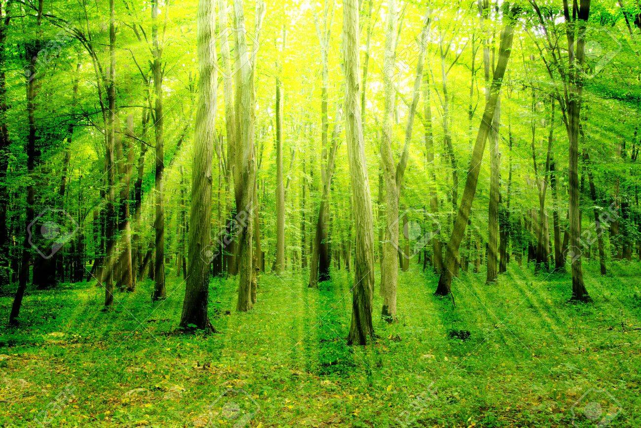 Early morning sun in the green forest Stock Photo - 6892797