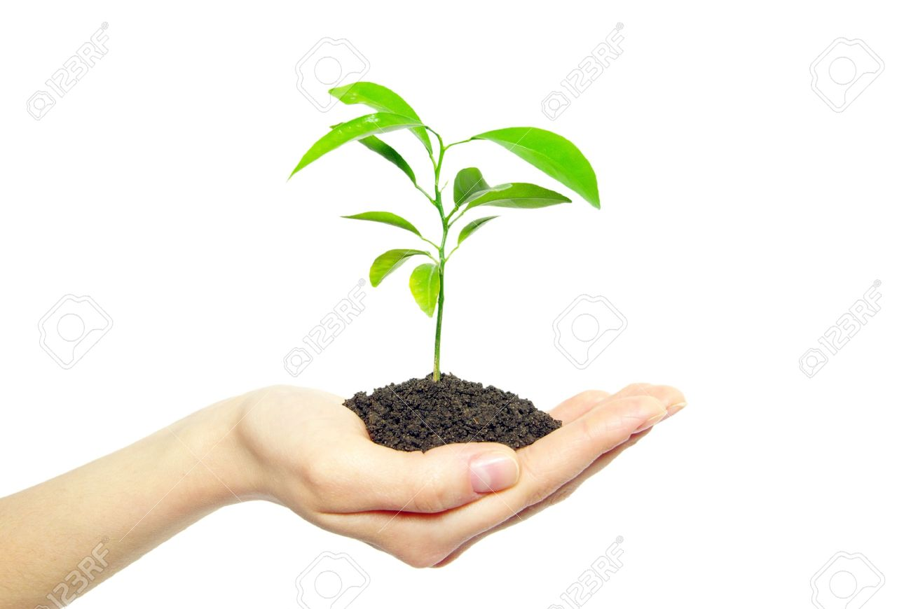 plant in female hands isolated on white background - 11064355