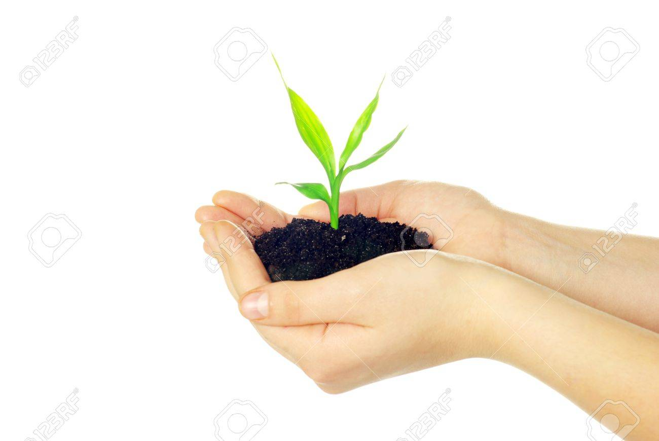 plant in female hands isolated on white background Stock Photo - 11142735