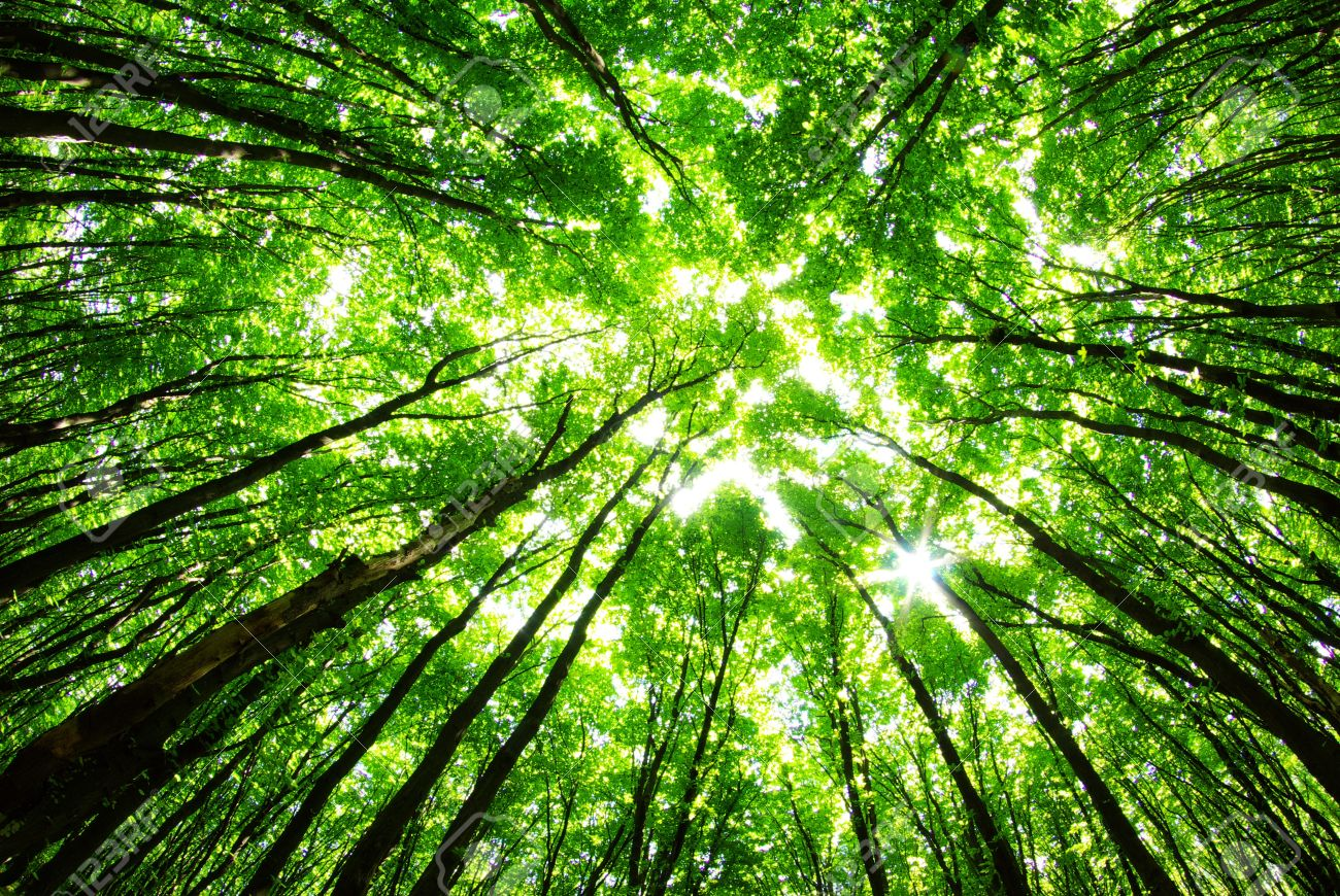 Green Forest Background In A Sunny Day Stock Photo Picture And Royalty Free Image Image 11526094