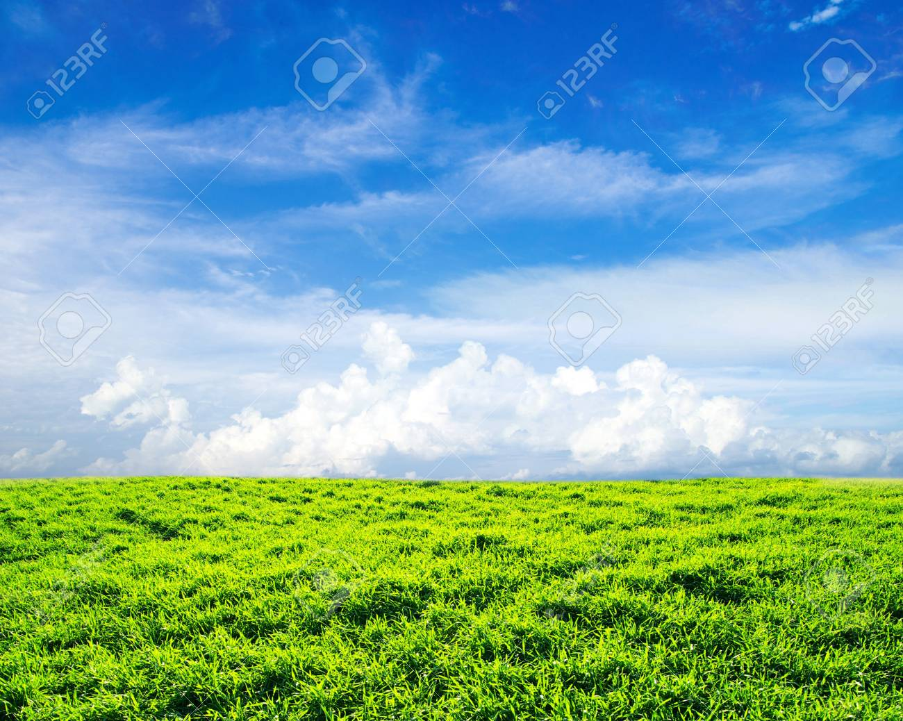 field on a background of the blue sky Stock Photo - 13694598