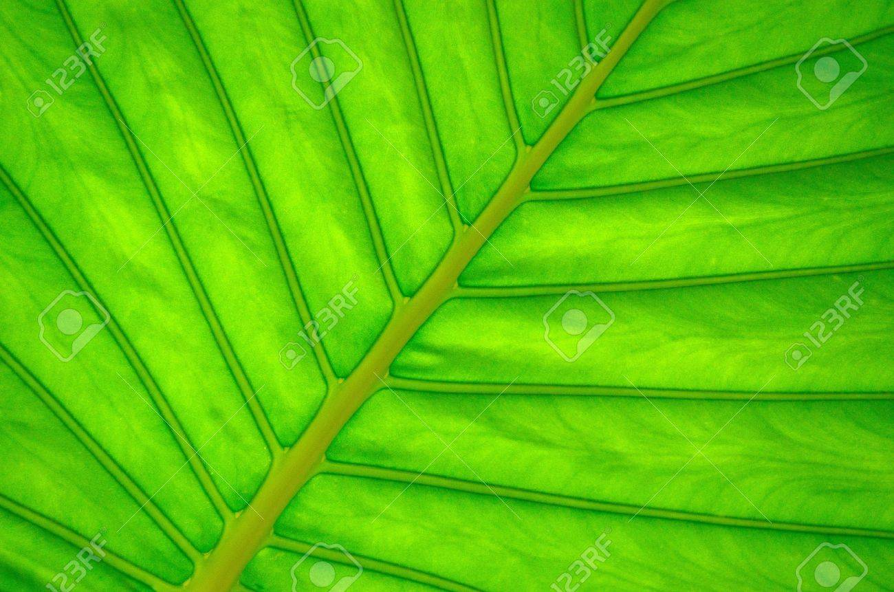 leaf of a plant close up Stock Photo - 14733418