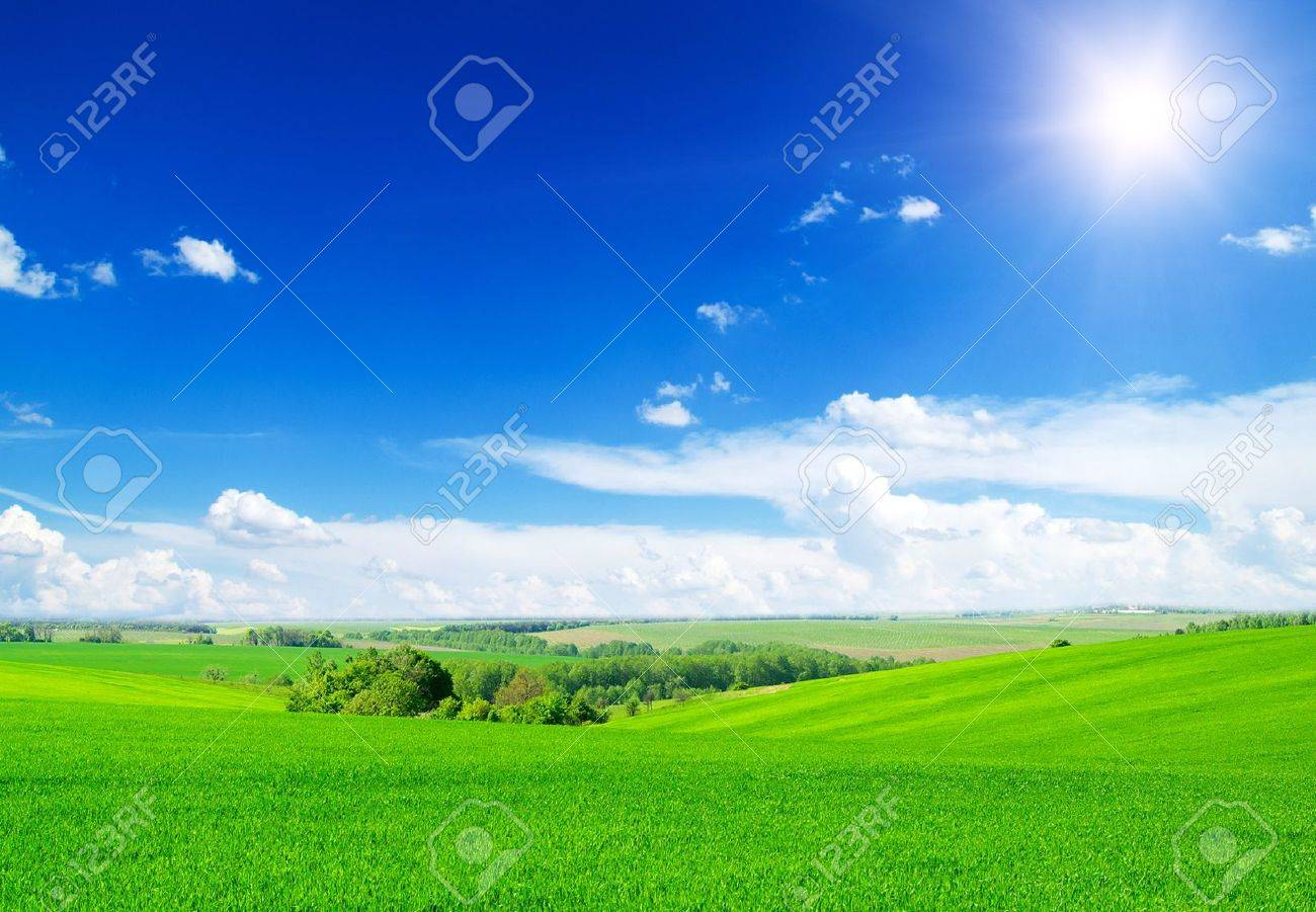 green field and blue sky Stock Photo - 15095019