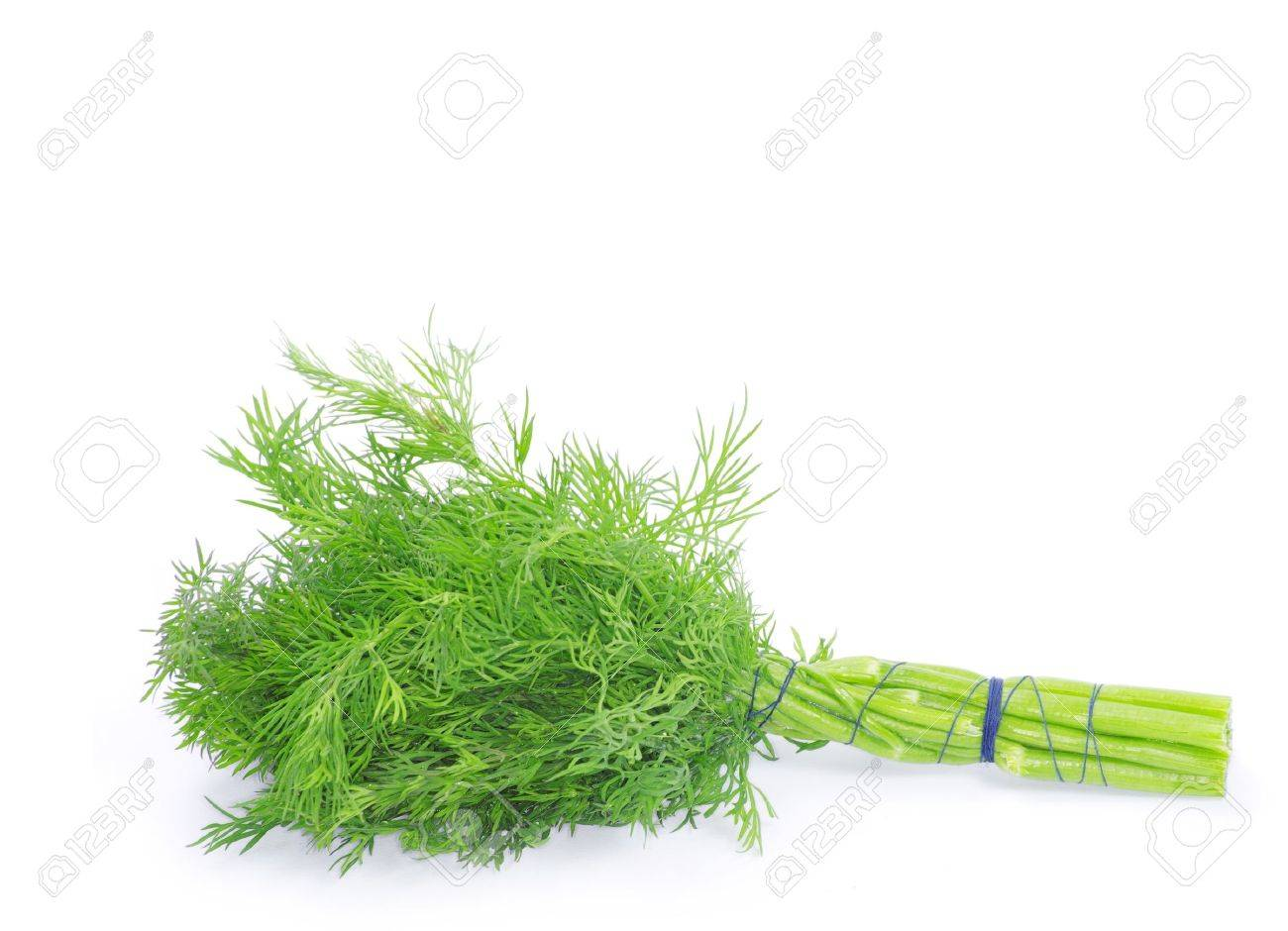 dill on a white background Stock Photo - 15532371