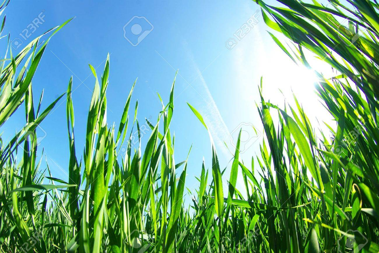 Beautiful green lawn isolated on sky Stock Photo - 16105063