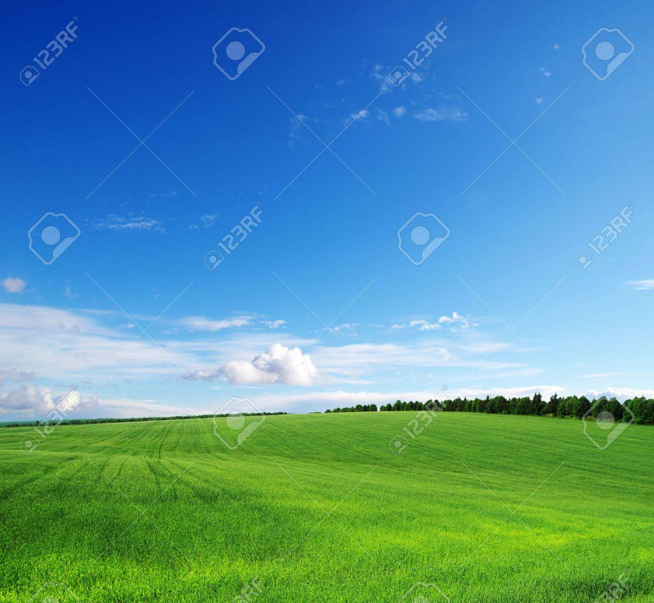 green field and blue sky Stock Photo - 16604040