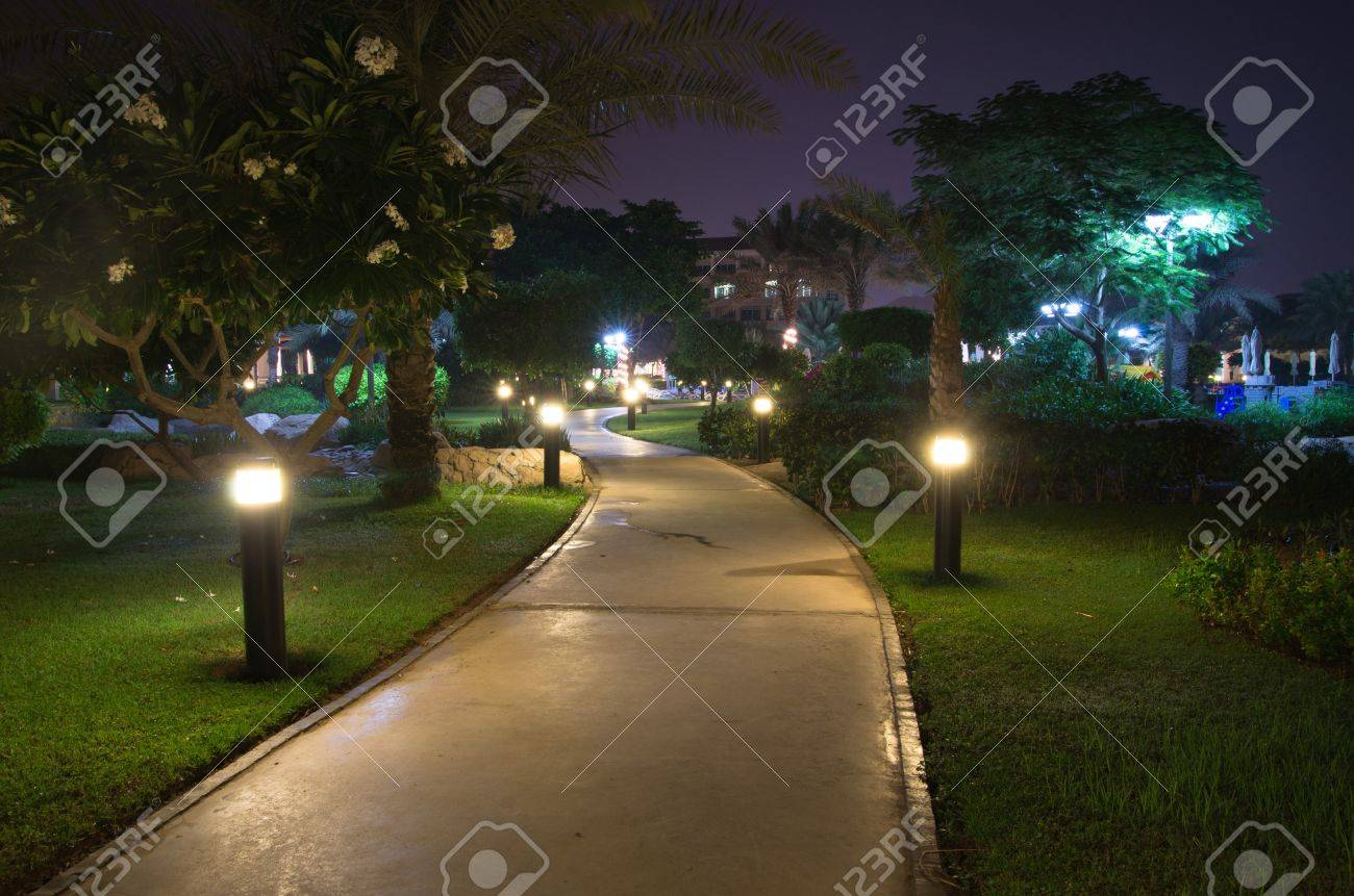 In the garden at night Stock Photo - 17781087