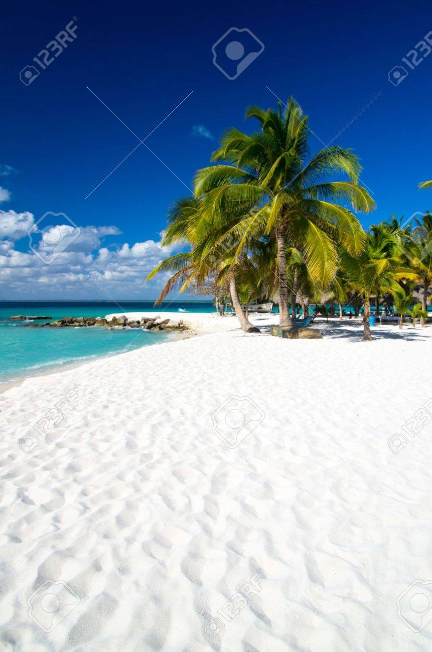 Caribbean Beach and Palm tree  .Paradise. Vacation and Tourism concept. Stock Photo - 18510638