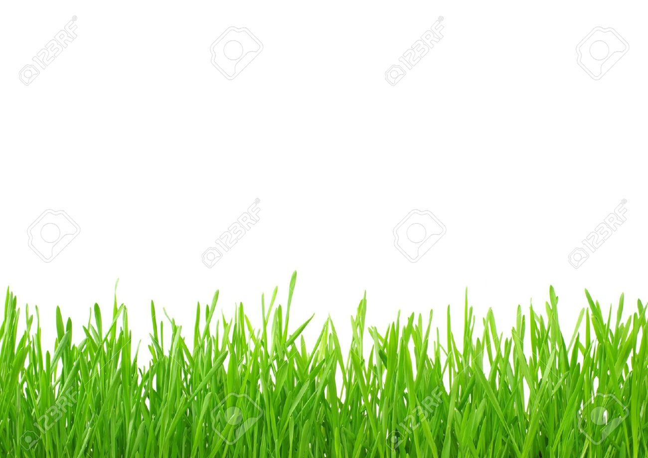 Green grass isolated on white background Stock Photo - 18510601