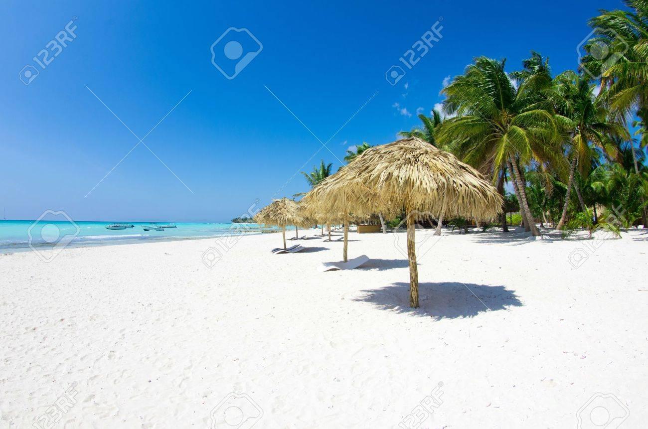 Beach chairs under a palm tree - 18723286